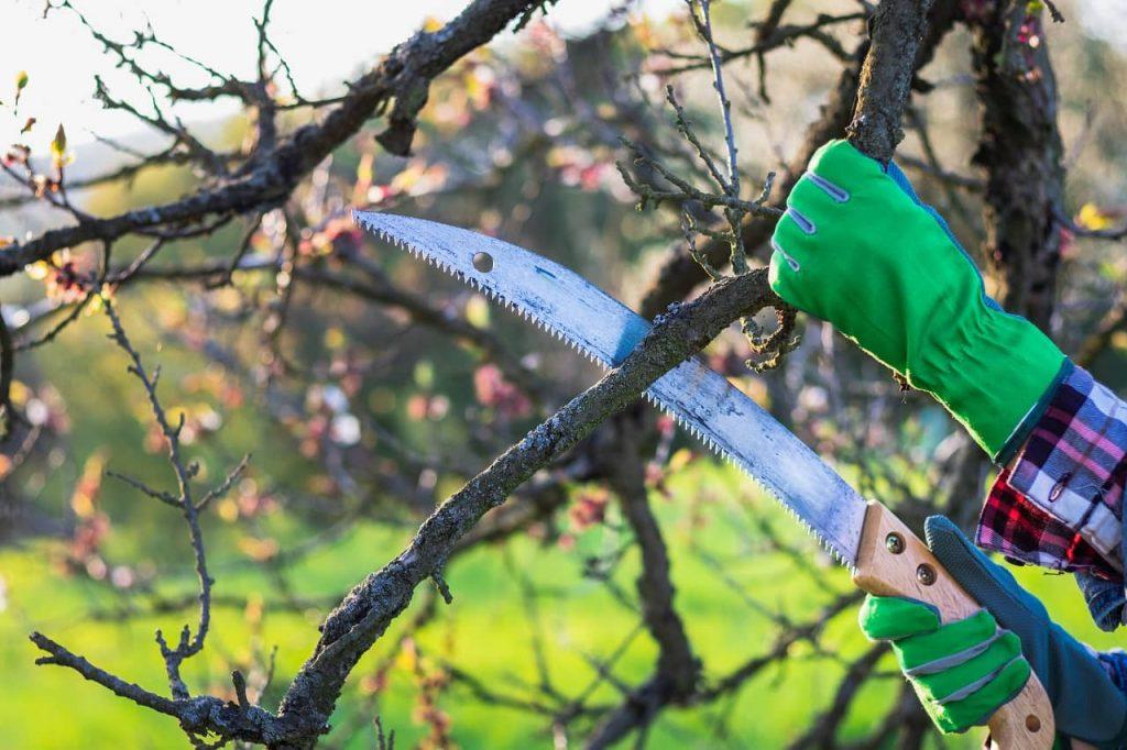 Scie à branche